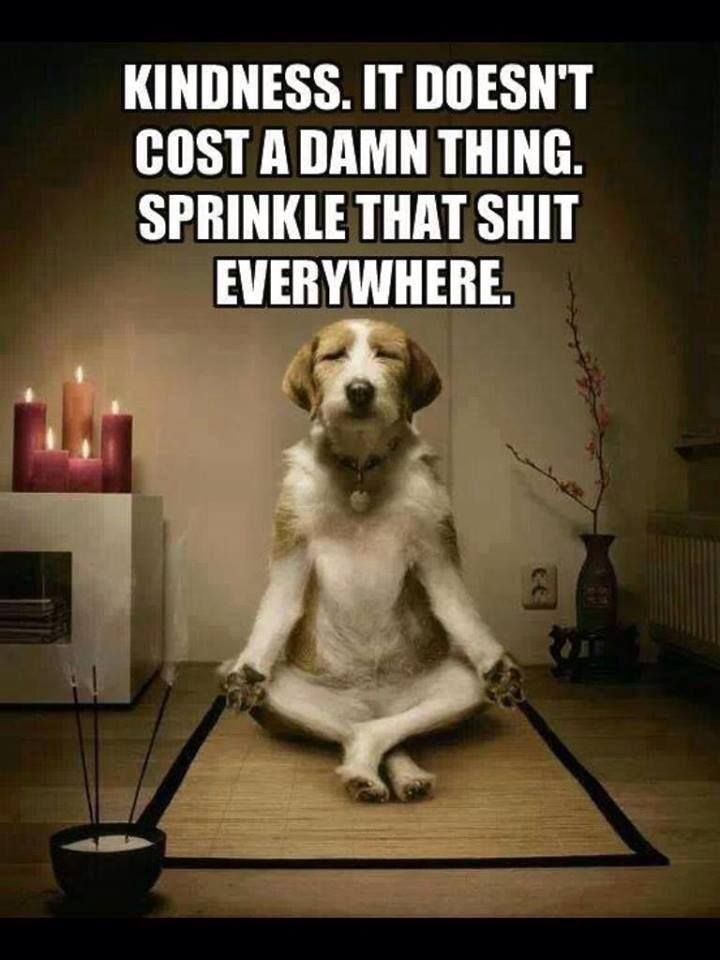 Sprinkle Kindness Zen Dog Dog Yoga Pedigree Dog Food