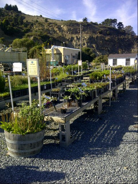 Watershed Nursery In Richmond Ca Specializes California Native Plants