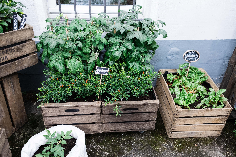 Anbauplan und Gartenkalender für Balkon und Terrasse – Osmers Garten