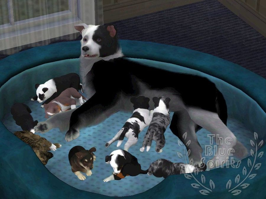 K Litter Puppies And Others By Spiritythedragon On Deviantart Sims 4 Pets Sims Pets The Sims 3 Pets