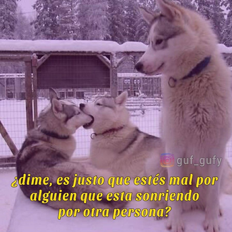 Pin On Perritos Con Frases