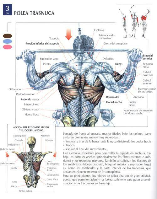 Dips ejercicio que musculo trabaja
