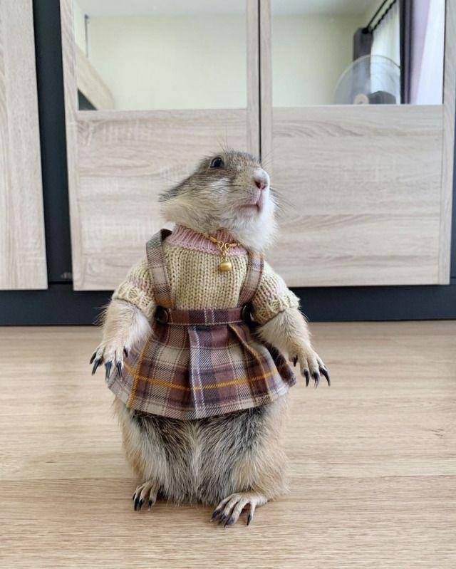 Pimpa is a prairie dog -