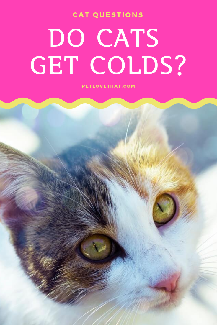 Just Like Humans Cats Can Also Catch Colds Or Upper Respiratory Infections However Human Colds Are Caused By Viruses That Cats Pet Medications Cat Questions