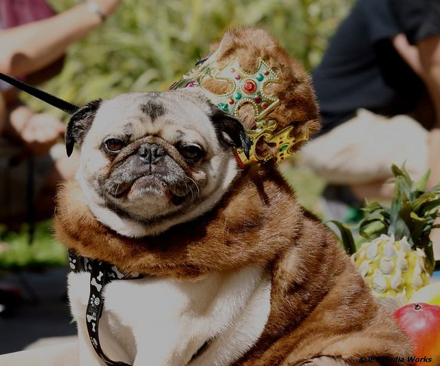 Pug Parade Pugs Puppy Party Puppy Birthday Parties
