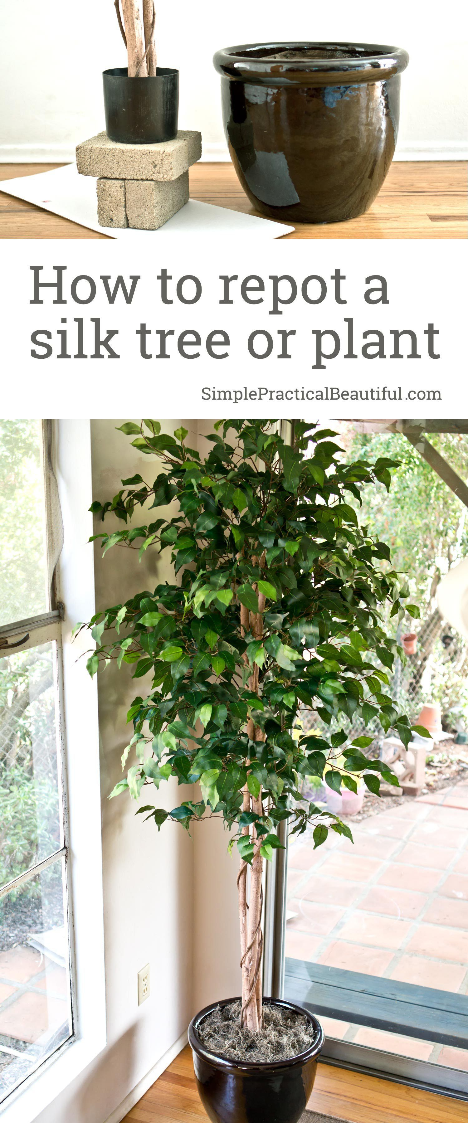 How To Repot A Silk Tree Simple Practical Beautiful Fake Indoor Trees Artificial Trees Decor Faux Plants Decor