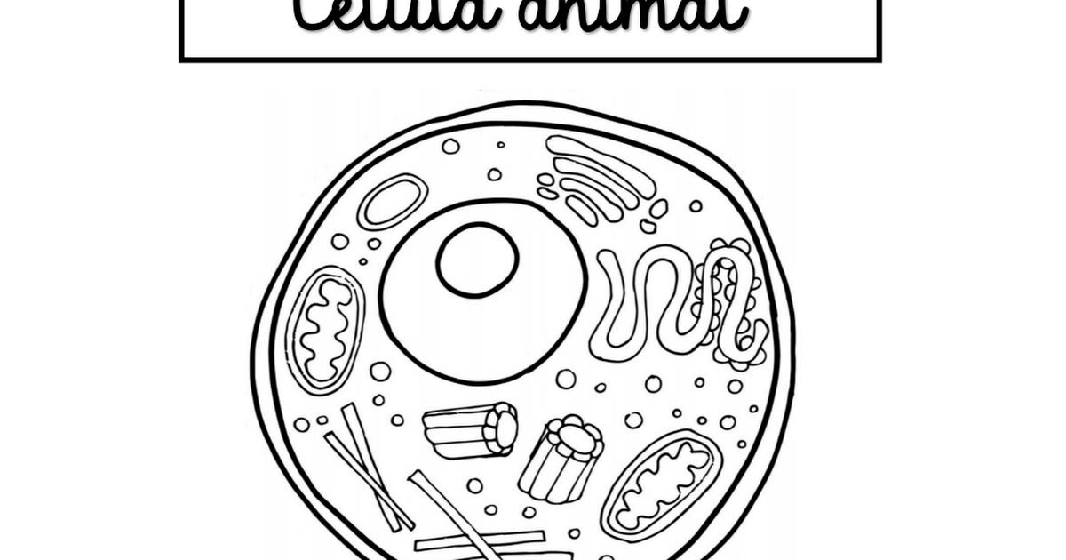Celula Animal Y Vegetal Celula Animal Seres Vivos Celulas