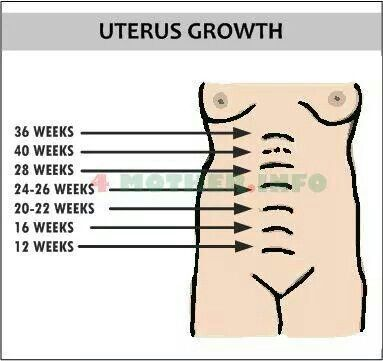 Uterus growth   Pregnancy   Months pregnant chart, Weeks to