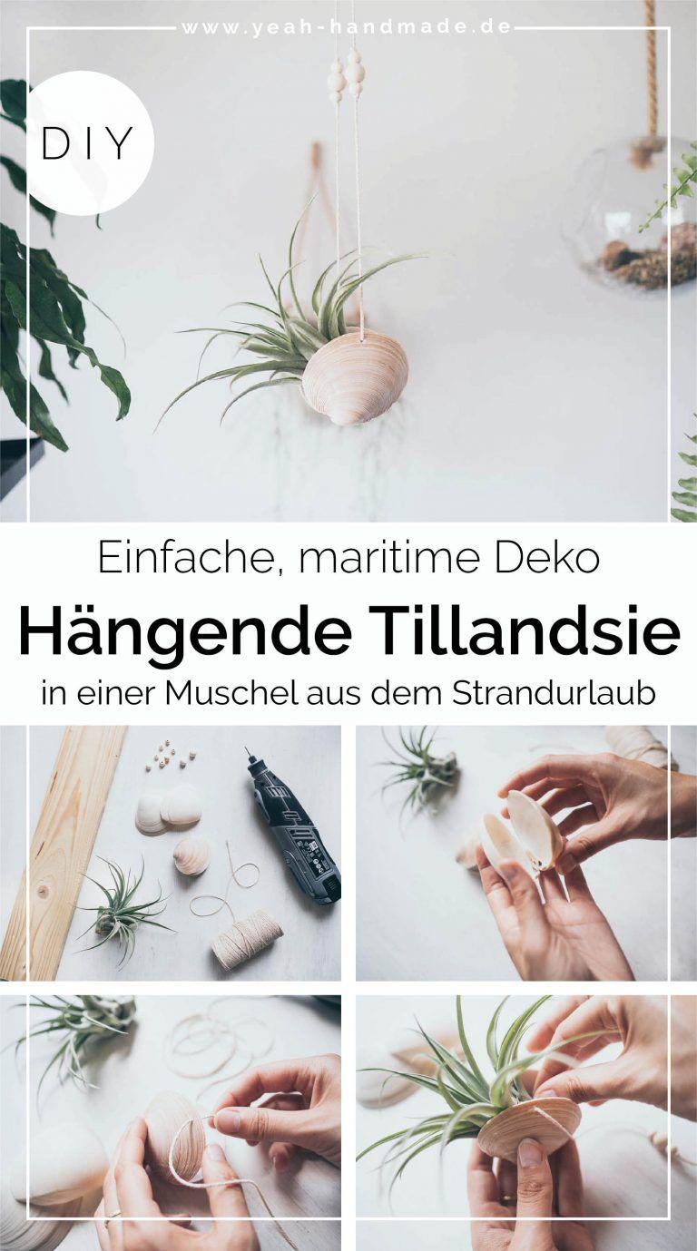 Diy Hängende Tillandsien Selber Machen Mit Muscheln Yeah Handmade In 2021 Deko Selber Machen Selber Machen Deko
