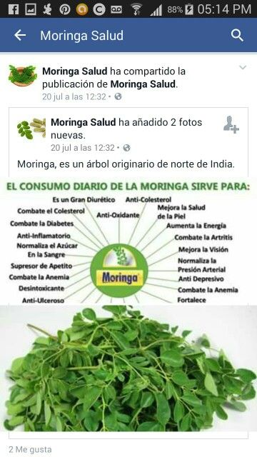 Moringa beneficios para la diabetes