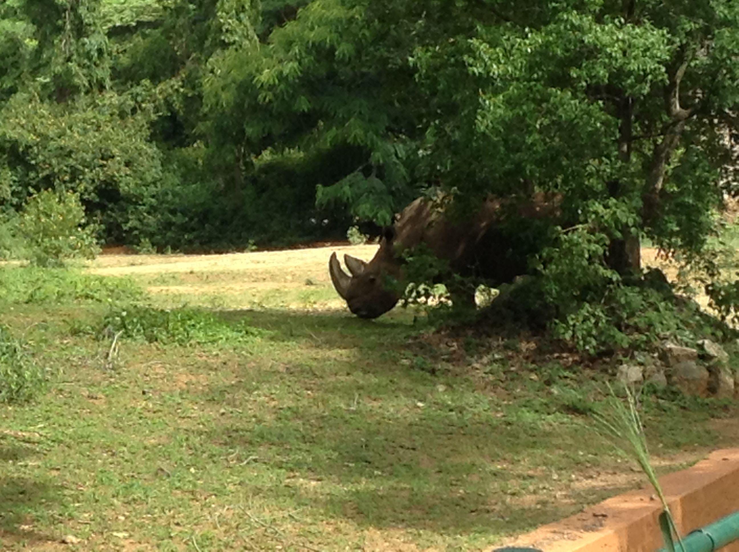 Mysore Zoo Sri Chamarajendra Zoological Gardens