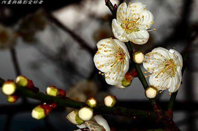 Amazingly beautiful flowers