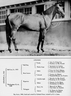 Pedigree Of Citation Triple Crown Winner 1948 Horses Thouroughbred Horse Thoroughbred Horse Racing