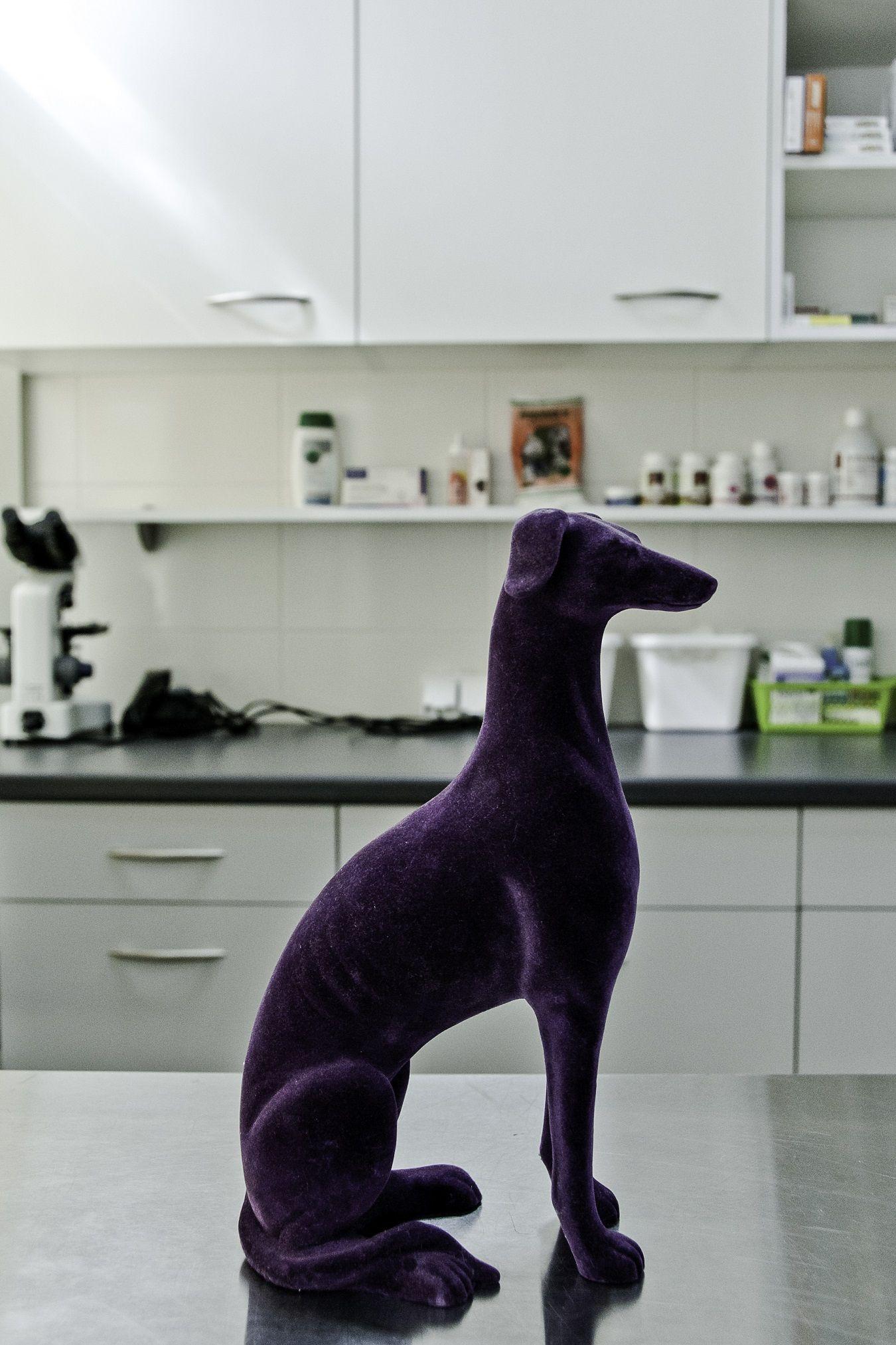 24h Omega VET Veterinary Clinic Clinic, Dinosaur stuffed