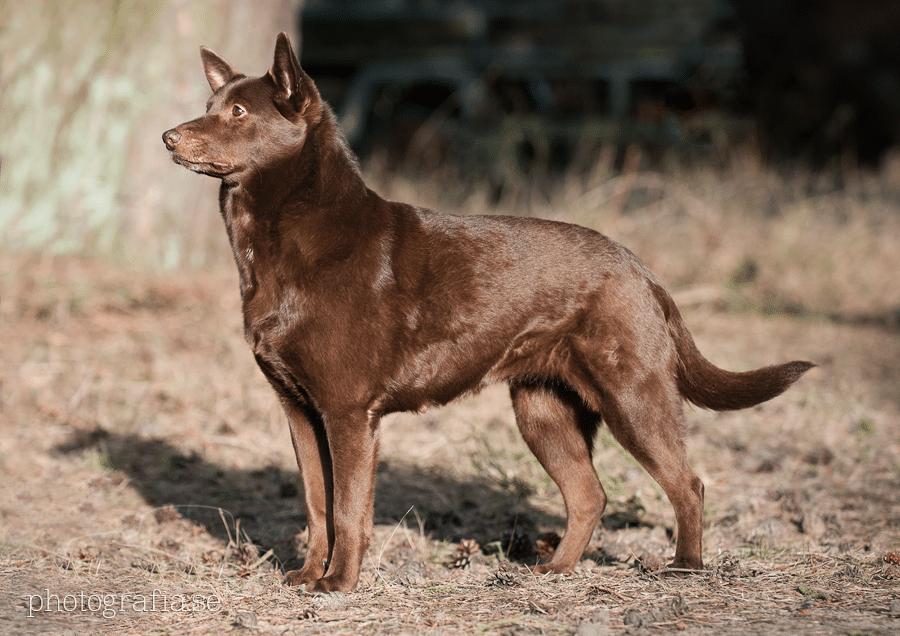 Schuhkipper 17 Cm Tief Billig Friseur Berlin Sockelleiste Kuche Anbringen Purebred Dogs Herding Dogs Dog Breeds