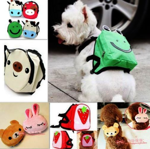 Check This Out Pet Dogs For Sale In Chennai Twitter Dog