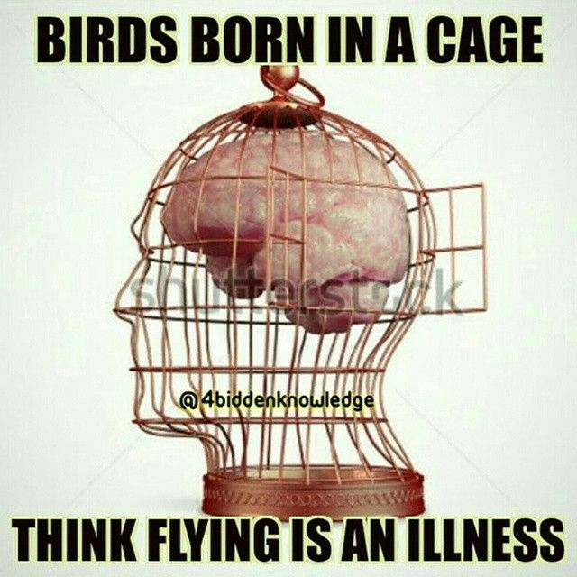Image result for bird grown in cage consider flying as sickness