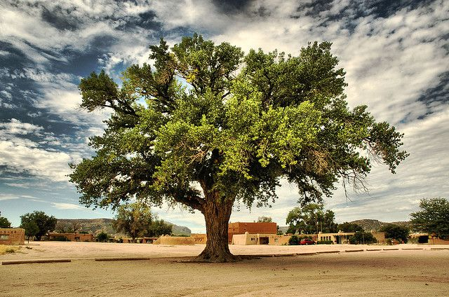 The Big Tree, San Ildefonso Pueblo, New Mexico, USA by Peter Bongers, via Flickr