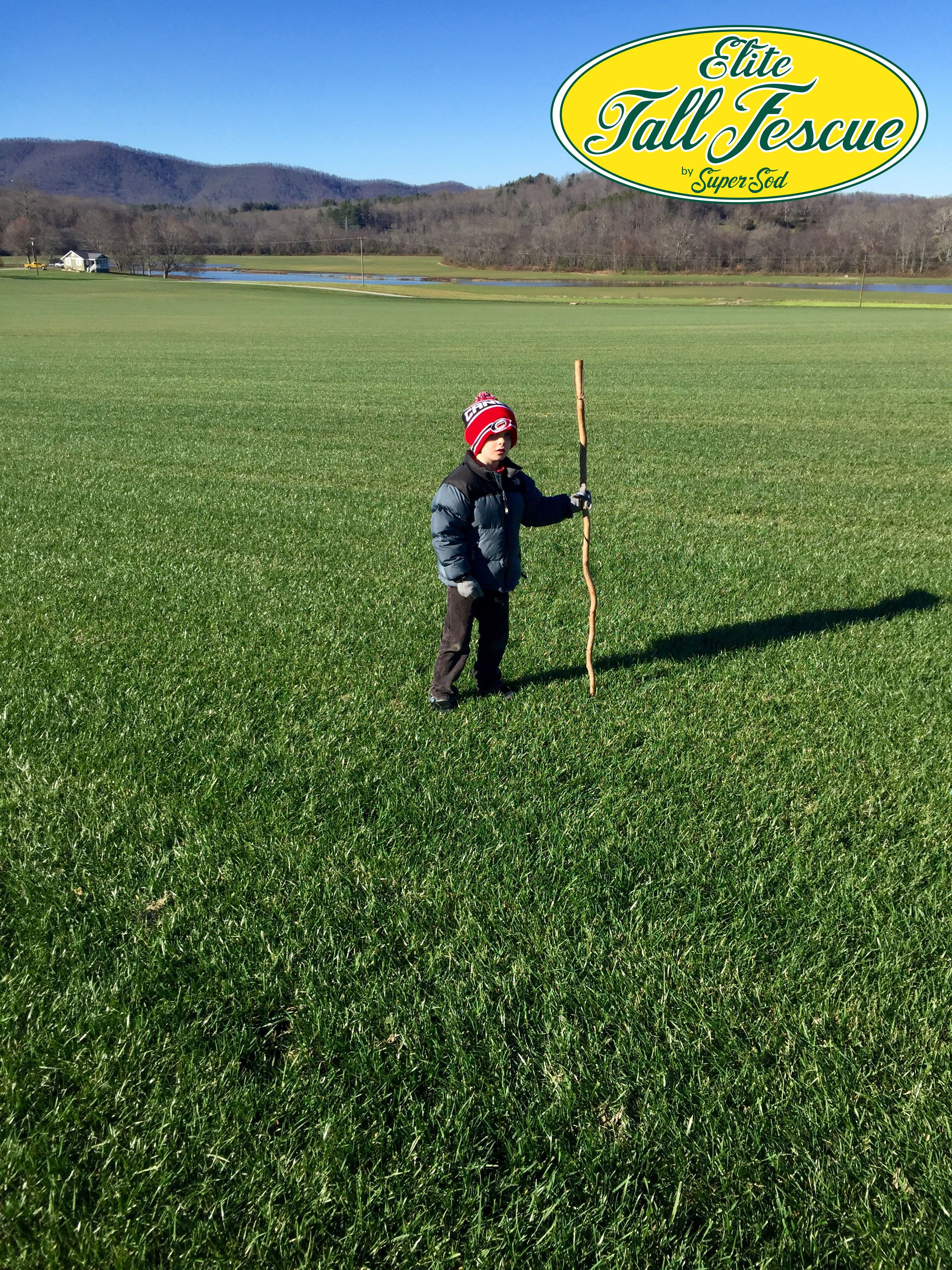 Brad S Son Brooks Played On The Elite Tall Fescue Sod Fields At Our Hendersonville Nc Sod Farm Last Weekend Thereby Giving It Tall Fescue Sod Tall Fescue Sod