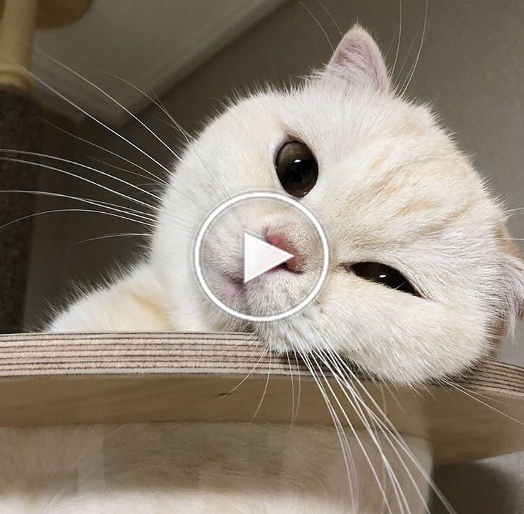 Cute Cat Is Not Enough 1 Videos Kitty Animal Cats Funny Pets Cutepets Catcommunity Animals Baby