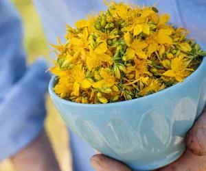 Recettes naturelles contre les petits maux de l'été   – SANTE Bien Etre