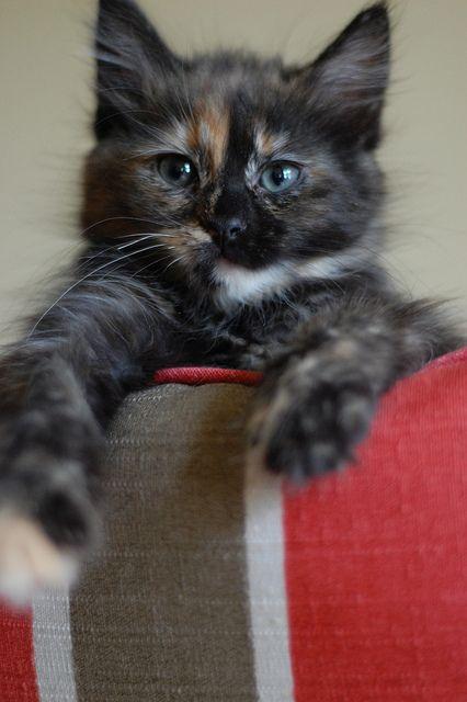 Adopt shelter kittens...
