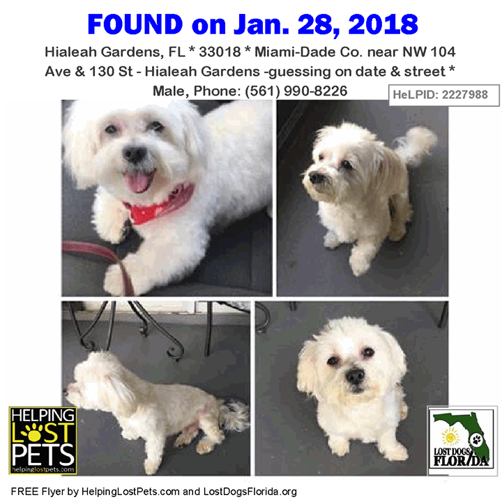 Is This Your Lost Dog Or Do You Know Who He Belongs To Do You Know This Dog Hialeahgardens Nw 104 Ave 130 St Hialeah Ga Losing A Dog