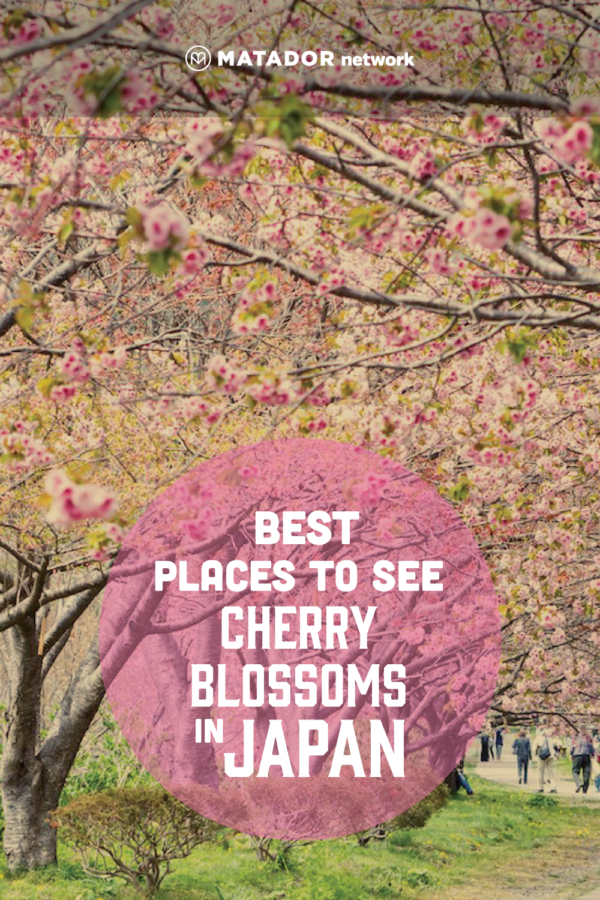 Everything You Need To Know About Japan S 2020 Cherry Blossom Season Japan Cherry Blossom Season Cherry Blossom Season Cherry Blossom