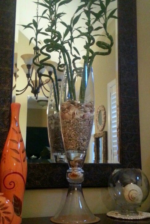 Corkscrew Lucky Bamboo And Seashells In 28 Tall Vase Tip If