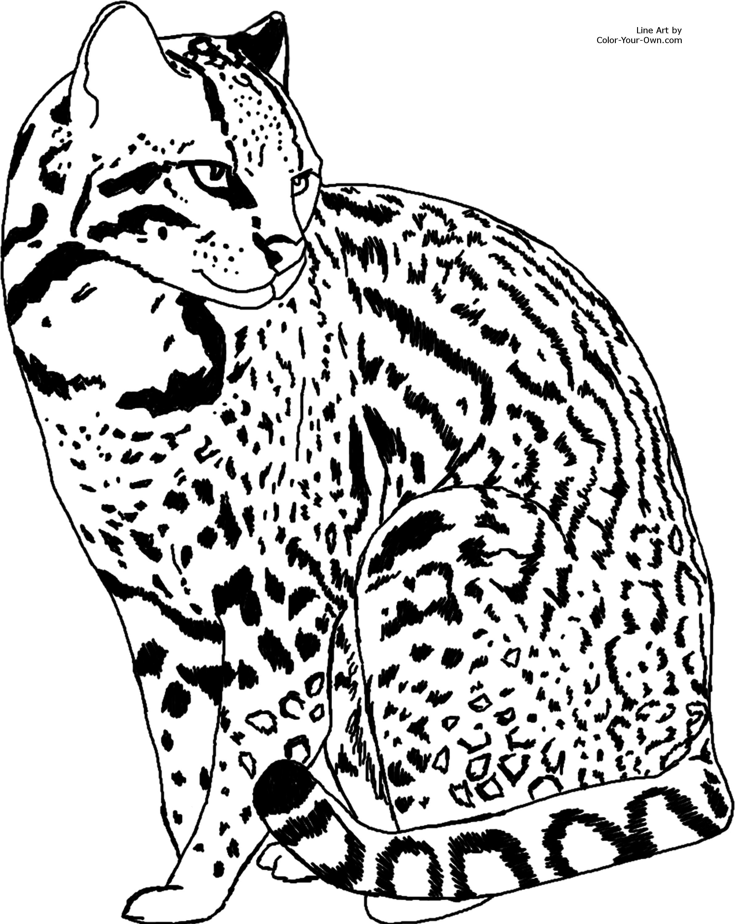 ocelot jpg 2387 3000 colouring pages animals pinterest cat