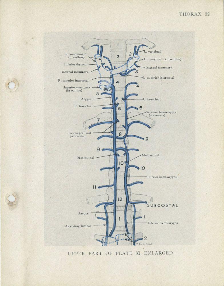 Vintage Anatomy Print 32 Azygos Innominate Veins Medical Student ...