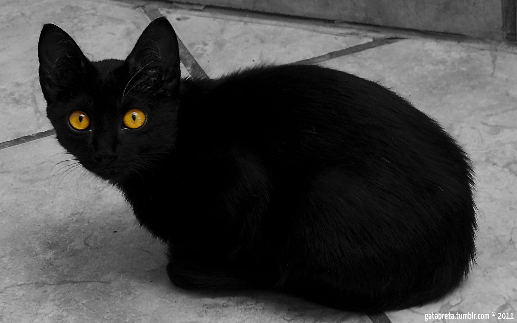 a black cat with yellow eyes!! *check!* Animals are sooo