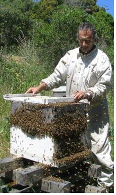 principles of backward beekeeping - awesome thoughts on letting the bees do their own thing!