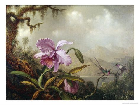 Hummingbirds and Orchids Giclee Print