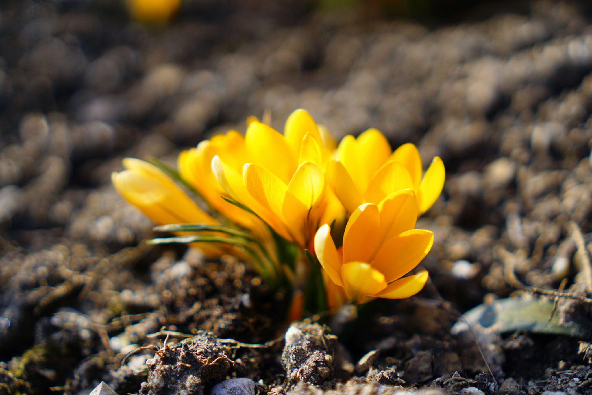 Flowers embellish the weekend | Flickr - Photo Sharing!