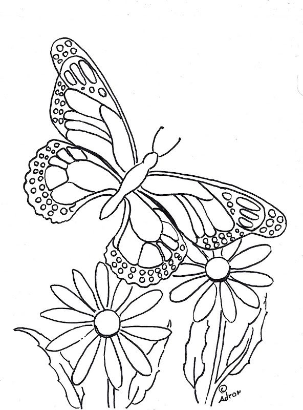 Butterfly Copy And Print Color Page Title