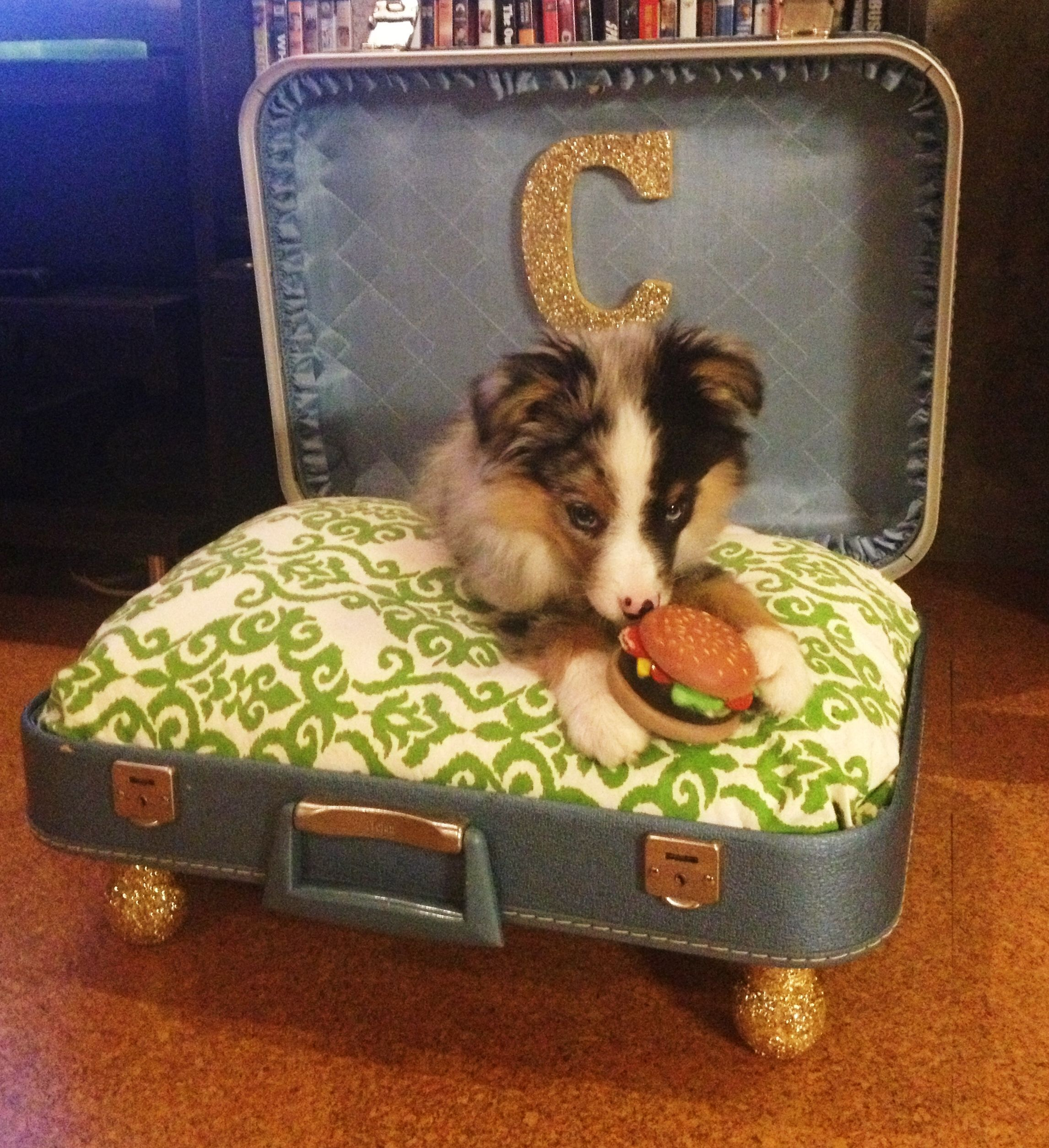 puppy bed dog suitcase mini husky uploaded user friends