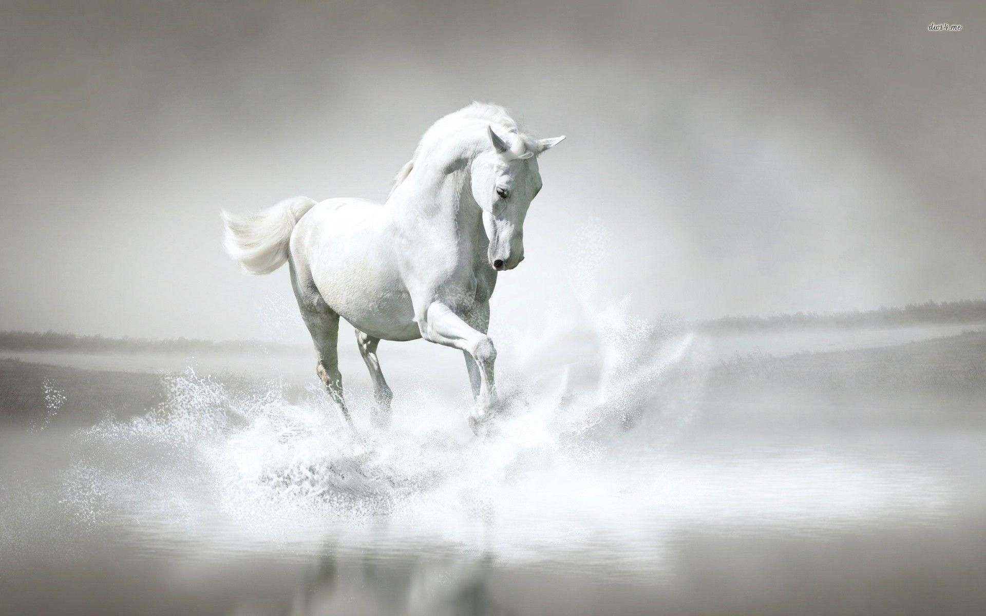 Horse Full Hd Wallpaper And Background 2560x1440 Id 432346 Kuda Putih Hewan Kuda