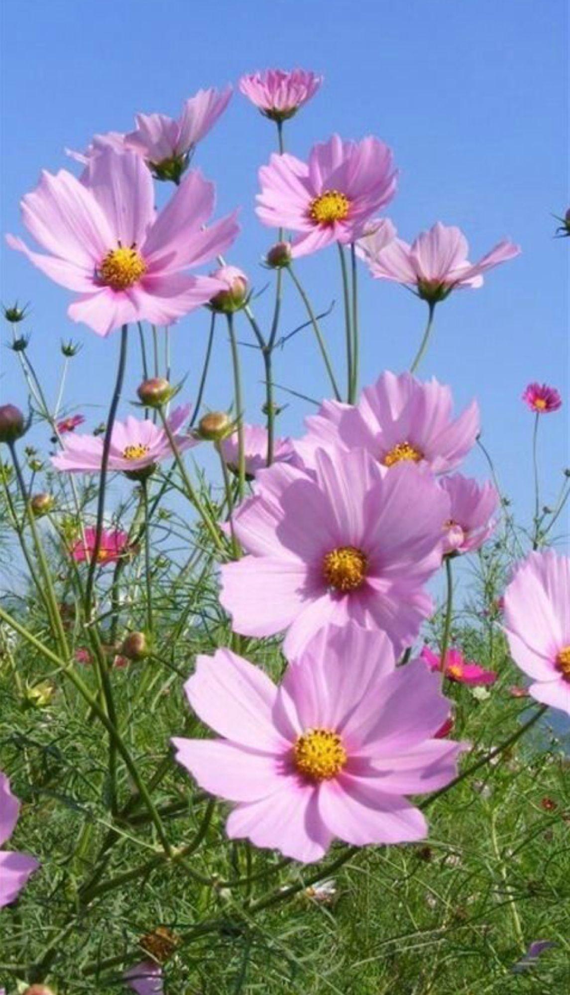 Flores Hermosas Mis Favoritas Flores Pinterest Flowers