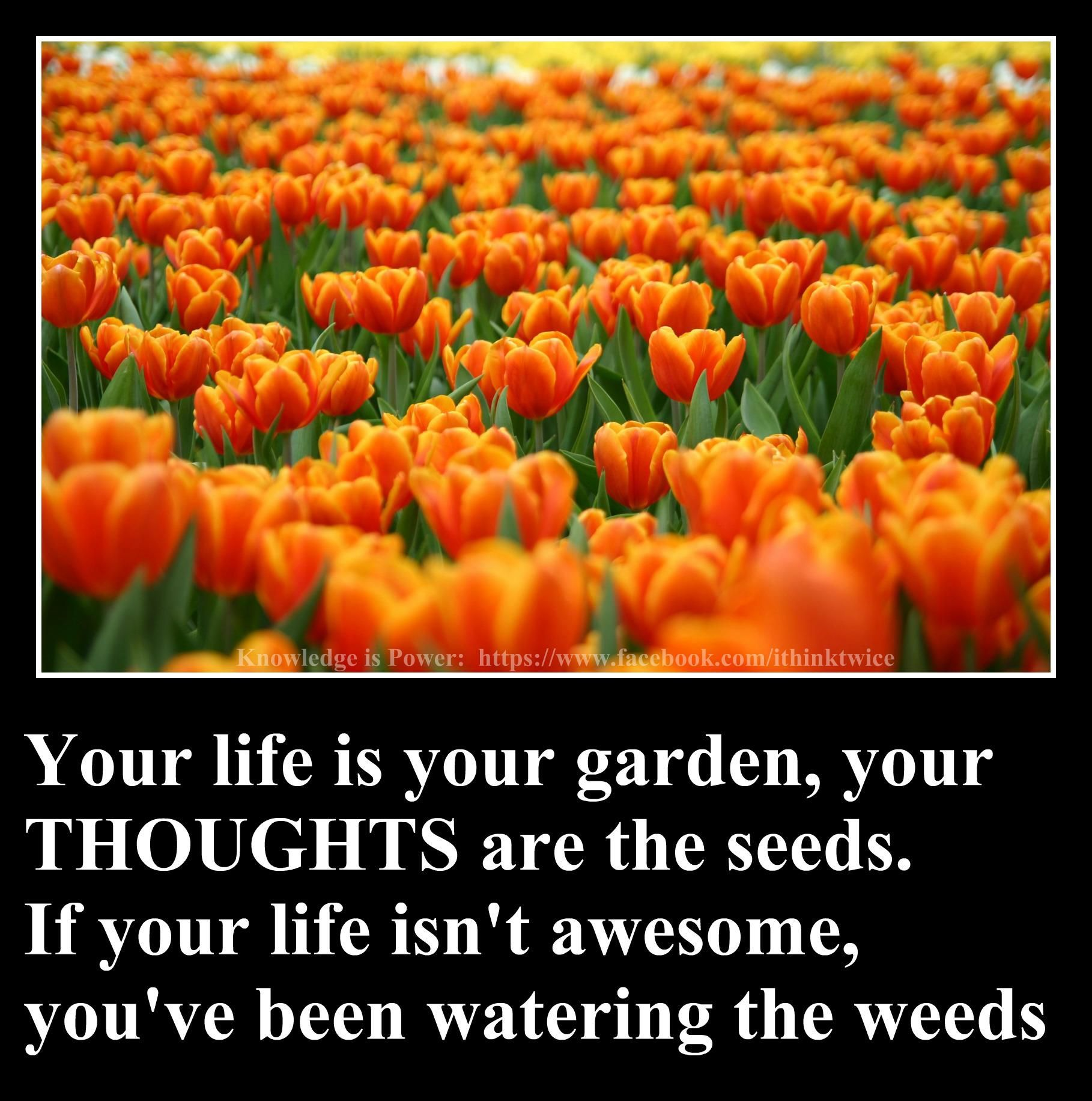 Food for thought !!! Funny inspirational quotes