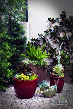 Succulent Pot Design Ideas