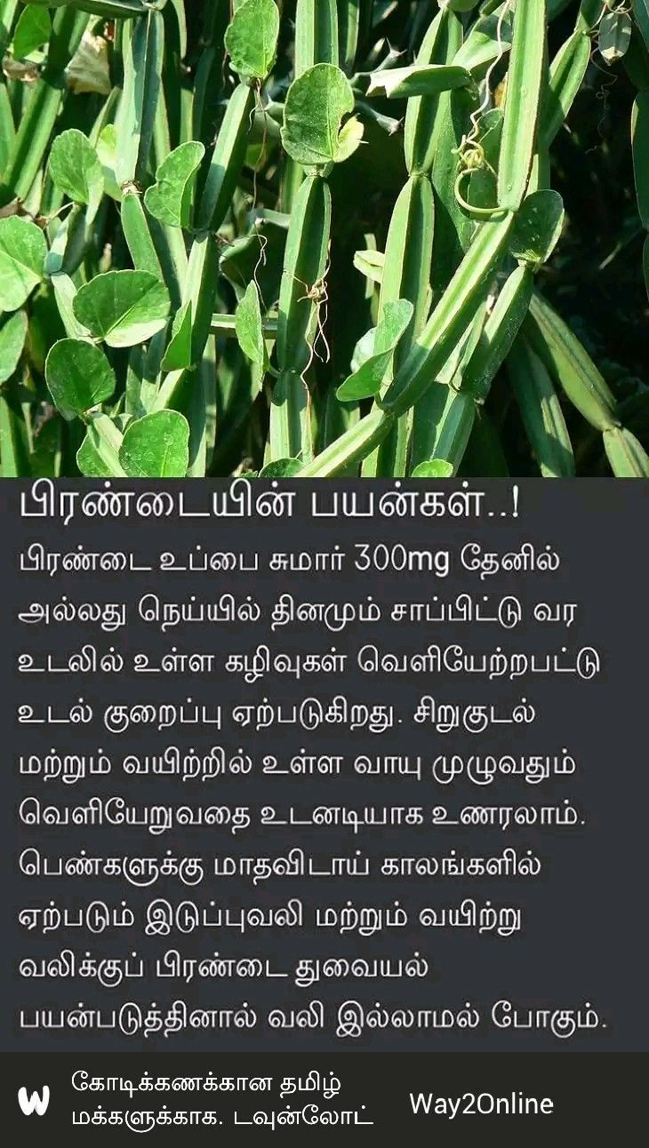 Pin by Thangarasu VS on Health Tips (With images
