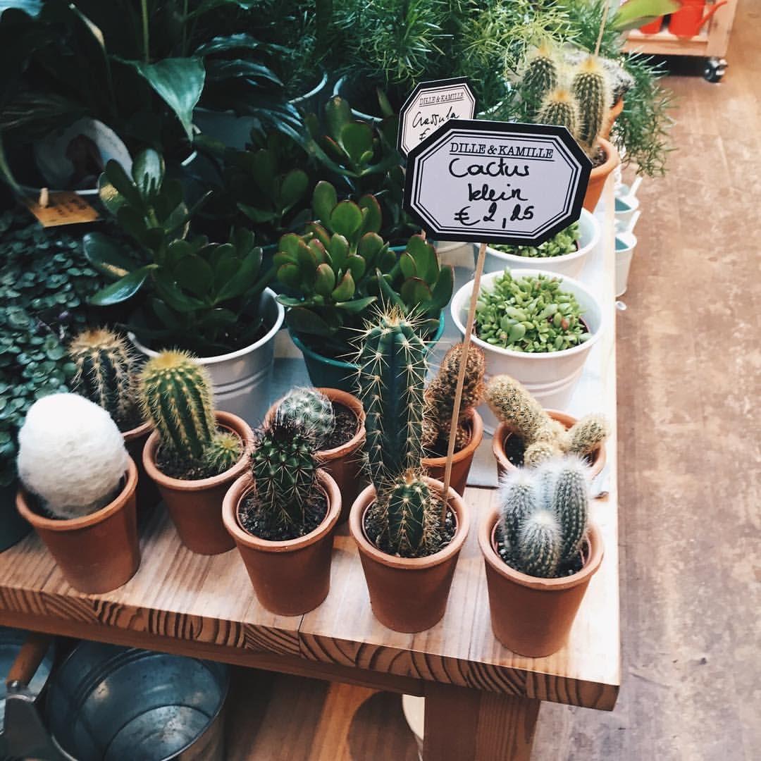 Cacti :)