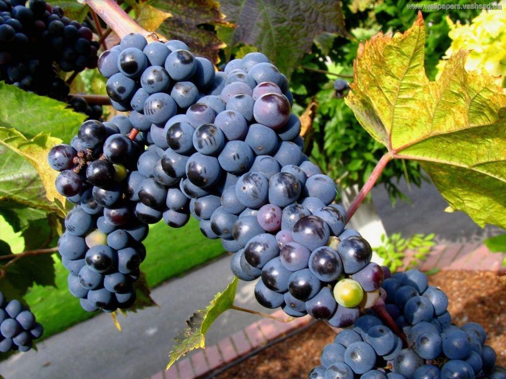 Papeis de Parede Gratuito - Frutas: http://wallpapic-br.com/natureza/frutas/wallpaper-1253
