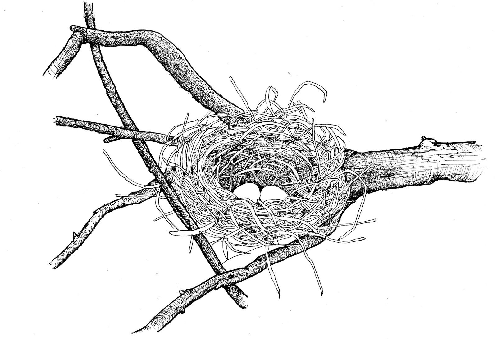 Image Result For Simple Bird Nest Drawing In
