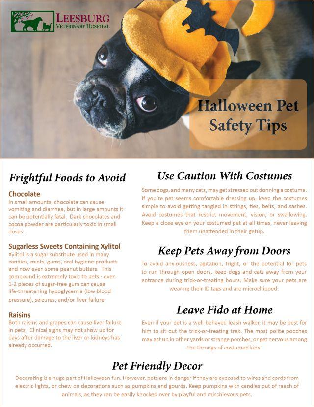 Halloween Pet Safety Tips Halloween Pet Safety Pet Safety Halloween Animals