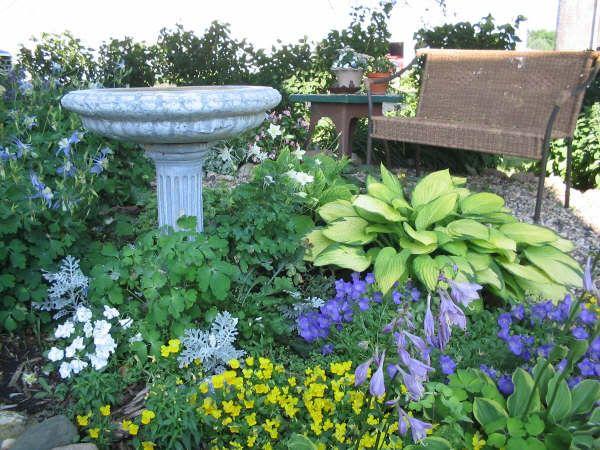 Please Show Me Some Shady Cottage Gardens   Cottage Garden Forum   GardenWeb
