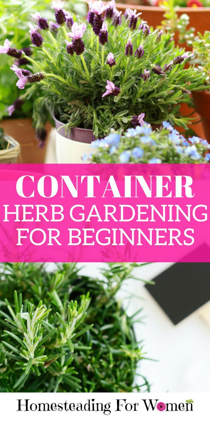 Container Herb Gardening For Beginners