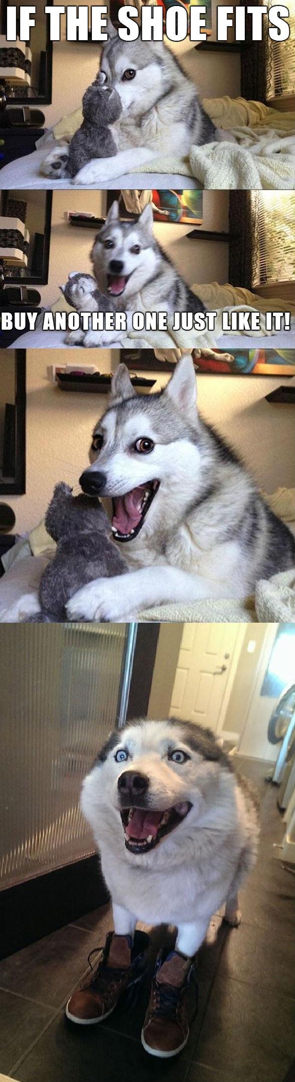 Husky Dog Memes Dog Meme Husky Funny