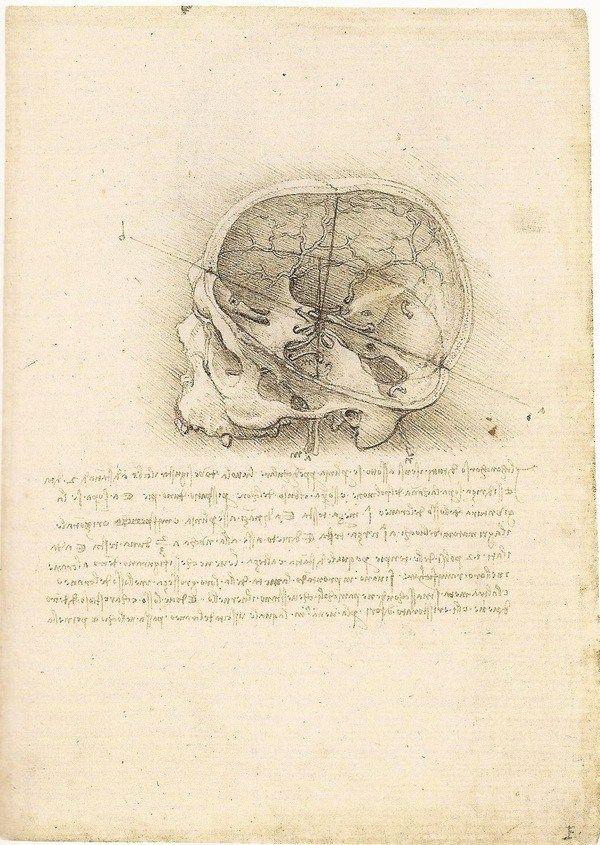The Cranium Sectioned (image from Leonardo da Vinci, Anatomist)